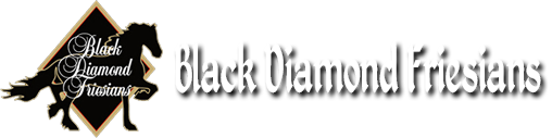 Black Diamond Friesians - Waukesha, WI